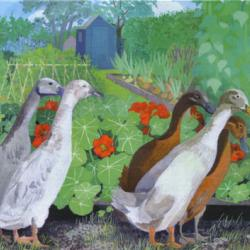 Allotment Ducks by Sheila Smithson