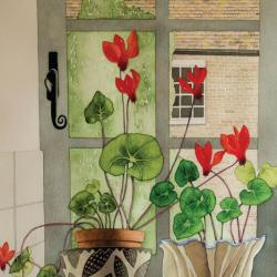 Cyclamen Window by Vera Rosenberry