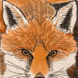 Fox by Linda Richardson