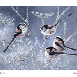Long Tailed Tits by Jeremy Paul