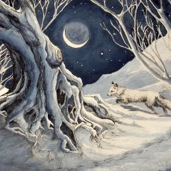 Midnight Moon by Jane Keay