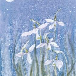 Moonlit Snowdrops by Sue Cullen