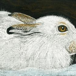 Mountain Hare by Linda Richardson