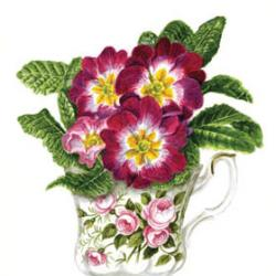 Primulas by Denise Hoyle