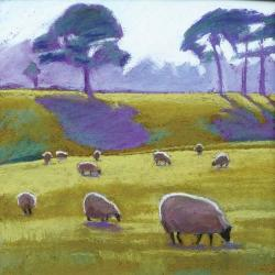 Sheep in the Sun by Sue Campion RBA
