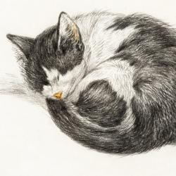 Sleeping Cat by Jean Bernard