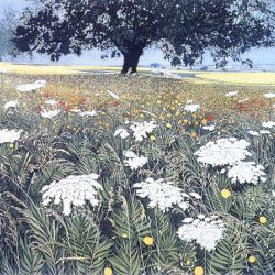 Spanish Fields by Phil Greenwood RE
