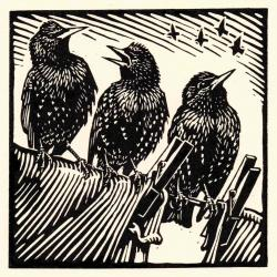 Starlings by Richard Allen SWLA