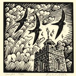 Swifts by Richard Allen