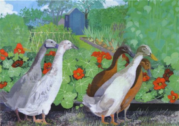 Allotment Ducks by Sheila Smithson