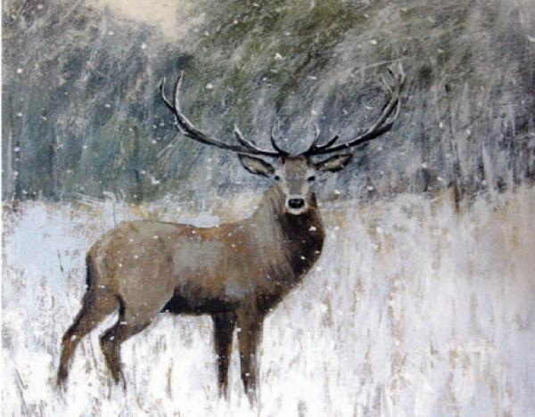 Winter Stag by Caroline McMillan Davey