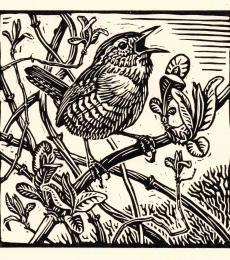 Wren by Richard Allen SWLA
